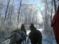 Trail rides, sleigh/wagon rides school trips, and much more