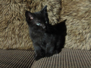 Gorgeous farm raised kittens to give away from great mousers!