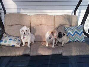 Pension de vacances pour chiens Molly  Elsa