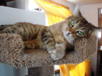 \ Catty Cat Catuary - Where Kitties Need Your Help! /  (Grimsby