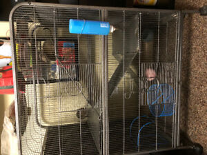 2 Degus and 4 level cage $100 obo