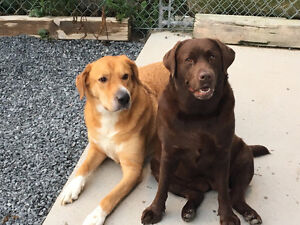 Doggy Daycare and Pet Boarding 7 Days a Week!