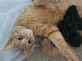 Ginger female cat