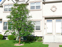 BEAUTIFUL, IMMACULATE 4 BEDROOM 3 BATH ANDERS TOWNHOUSE