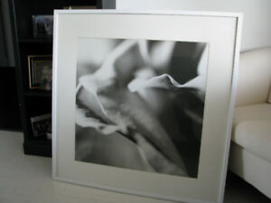 Beautiful Framed White Silvery Gray Inside a Flower Orchid Iris