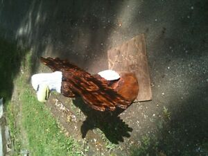 Chainsaw Art, Big Winged Eagle Windsor Region Ontario image 3