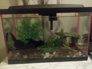 tank. heater. filter. led hood all decor and betta fish