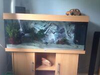 JUWEL 4ft aquarium set up inc fish and ornaments