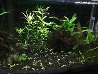 Selling all these fish plants for $15