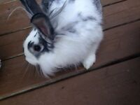 Rescue bunny looking for a home !!