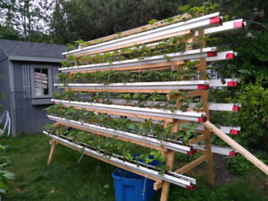 Vertical Garden Urban Farm A-Frame Strawberries Salad Greens