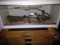 Pinstripe royal male and tank if required