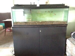 Big fish tank comes with 5 fish am flex able on price