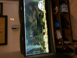 55gal fish tank with all  accessories Cambridge Kitchener Area image 2