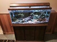 35 Gallon Fish Tank and Solid Oak Stand