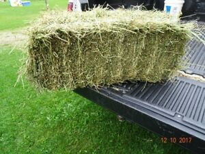 Small Square Bales of Second Cut Hay