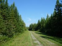 Terres à bois à St-Gérard (Weedon) en Estrie