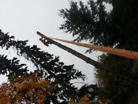 Tree services: tree removals, pruning, hedge trimming