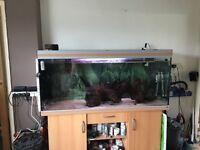 5ft rena aquarium