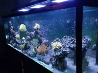 180 Gallon Reef System