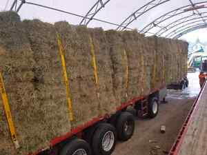 Small squares in 21 bale bundles of hay