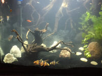 20 gallon tank with stand, décorations and fish
