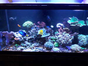 Saltwater fish and corals. Make me an offer