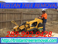 Professional tree cutting & removal service 289-992-9428.