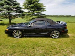 Mustang Cobra | Great Deals on New or Used Cars and Trucks Near Me