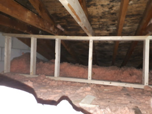 Mold remediation and air purifying,  black mold, mold removal