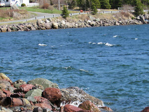 200 FT OCEANFRONT PROPERTY..COLLIERS, OPPORTUNITY KNOCKS! St. John's Newfoundland image 8