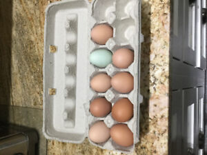 Farm fresh eggs available today...$5 dozen