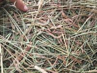 2015 Good Quality Timothy/Grass/Alfalfa Hay! $5/bale
