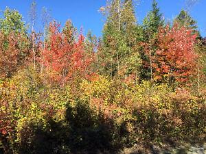 Très grand pour maison ou chalet Saguenay Saguenay-Lac-Saint-Jean image 9