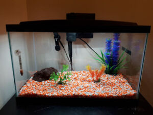 MOVING SALE GLASS AQUARIUM SIZE 10 GALLON TANK
