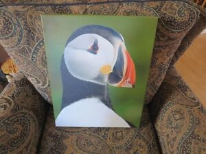 PORTRAIT OF A PUFFIN BY RON PITTS