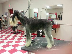 Gentle Dog Groomer Kitchener / Waterloo Kitchener Area image 4