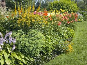 Vous avez des vivaces en trop, fleurs, plan de légumes ?