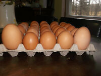 30 fresh brown eggs for $10 ( delivery included) Free Range