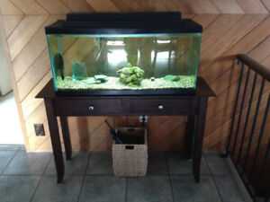 Complete 40L Fish Tank & stand w/Fish included