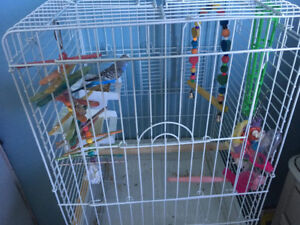 Budgie bird, cage, toys and food