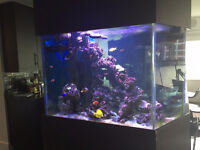 Salt water fish tank (140 gal) - Free delivery and set-up