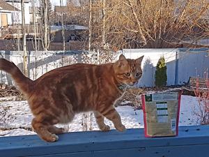 Missing cat in Sherwood Park/Summerside formerly