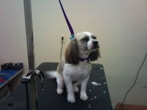 DOGGY STYLE GROOMING Cornwall Ontario image 2