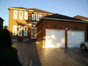 One Bachelor Basement for Rent in Markham and Denison
