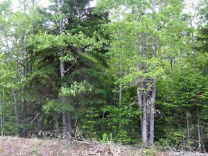 LARGE ACREAGE 237 ACRES, GREAT HUNTING AREA