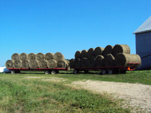 HAY FOR SALE, top notch quality