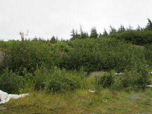 1 MILLVILLE ROAD, AVONDALE..  SECLUDED..1 ACRE LOT St. John's Newfoundland image 17