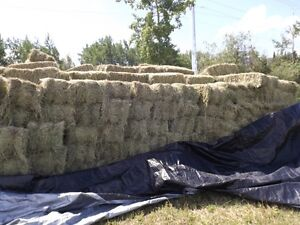 HAY FOR SALE PROXY 65 POUNDS BALES