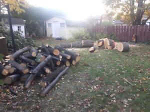 Bûches de bois de tilleul